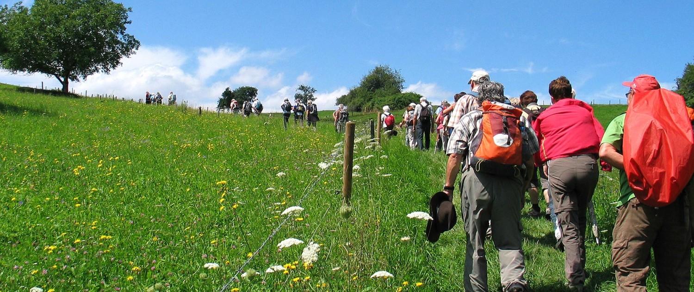 Schwarzwaldverein-Bietigheim-Bissingen-wandern