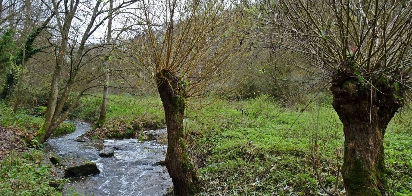 Heimat- und Naturkunde, unterwegs im Naturschutzgebiet Leudelsbachtal am 28. Nov.