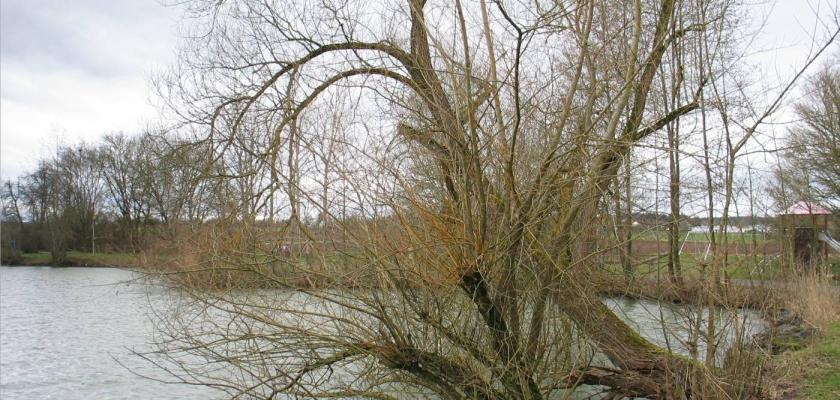 "Ins ""Weisse"" oder ""Grüne"" am 23. Februar"